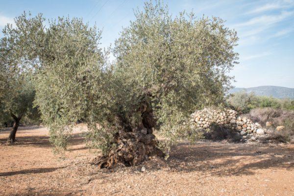 oliveres_menu